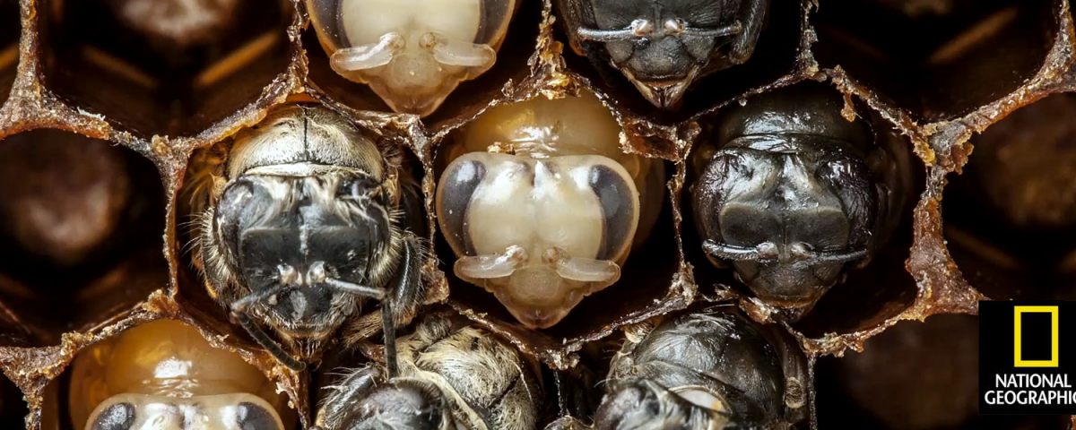 For a Biologist-Turned-Photographer, a Beehive Becomes a Living Lab