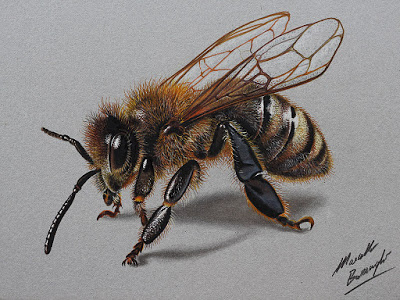 Video Comment Je Dessine Une Abeille Ultra Realiste Par